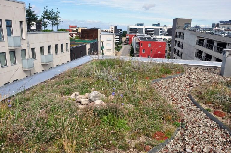 Grönytor räddade från översvämningsskador