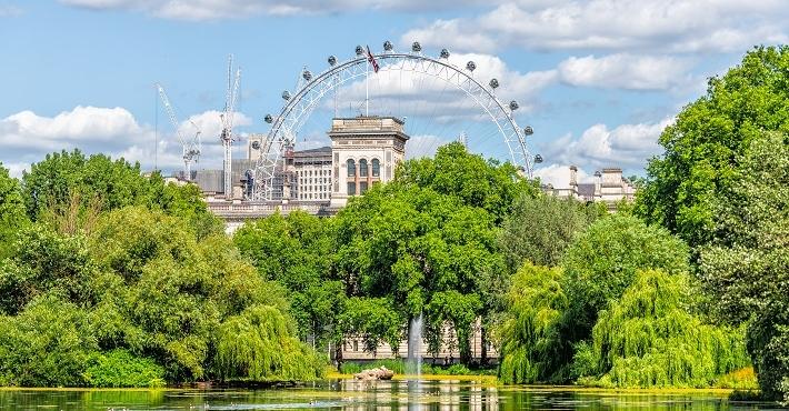 Engelska städer sparar miljarder på sina träd